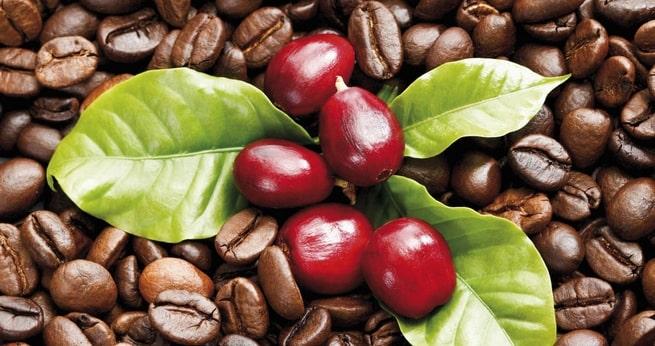 cà phê nguyên chất robusta