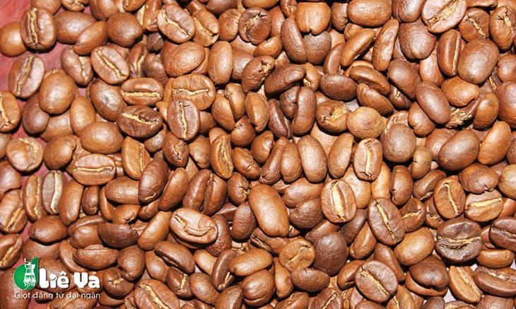 catimor coffee