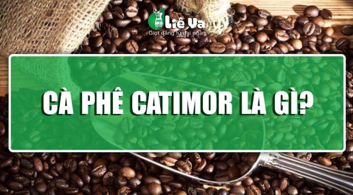 cà phe catimor là gì