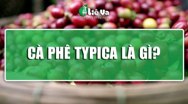 cà phê typica là gì